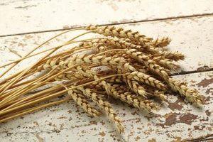 Whole grain wheat berries